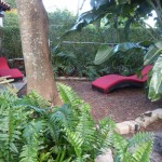 Gemütliches Plätzchen im Palmengarten