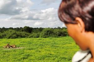 Mit einem Ladyguide bei der Löwenpirsch: Chobe Game Lodge in Botswana