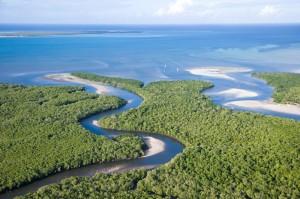 Mangrovenwald bei Ibo Island Lodge, Mosambik, buchbar bei Iwanowski's Reisen