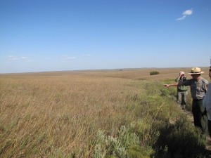 TallgrassPrairie_Kansas_USA_Iwanowski