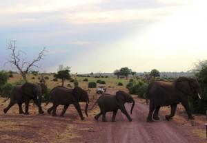 Safari beim Chobe Elephant Camp, Foto von Tanja Köhler