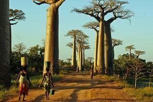 Baobab Madagaskar. iwanowski.blog