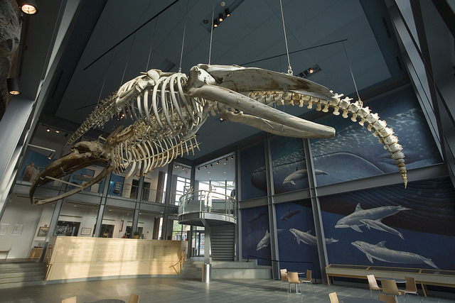 3-MelvilleMD-WhalingMus-FotoNBWhalingMus