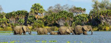 Elefanten im Lake Manzek
