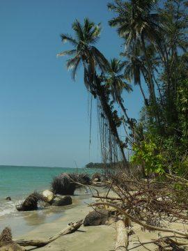 Cahuita Nationalpark an der Karibik-Küste