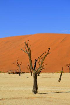 Dead Vlei im Namib Naukluft Park